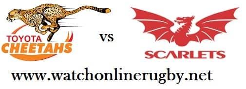 Cheetahs vs Scarlets